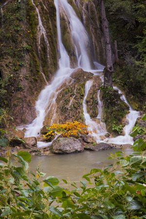 small waterfall with yellow plant and white foam