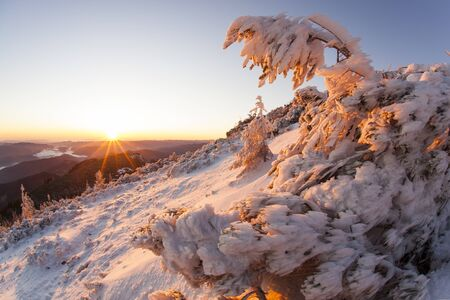 bent tree full of snow and ice at red sunset in romanian mountains