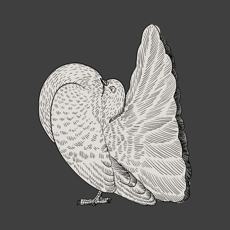 Realistic hand drawn couple of white doves, pigeons flapping wings, symbol of love and romance, marriage icon Illustration