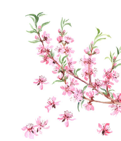 Almonds tree pink flowers close-up with branch isolated on white background. Vector illustration.