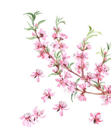 Amandelenboom roze bloemen close-up met een tak op een witte achtergrond. Vector illustratie.
