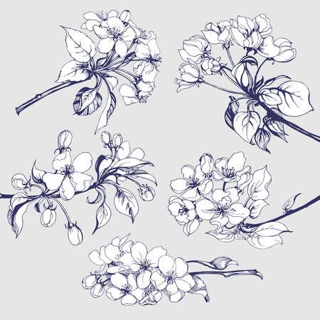 dibujos lineales: Conjunto de flores: Bosquejo de la ramificación floreciente del manzano. elemento para su diseño. ilustración vectorial Vectores