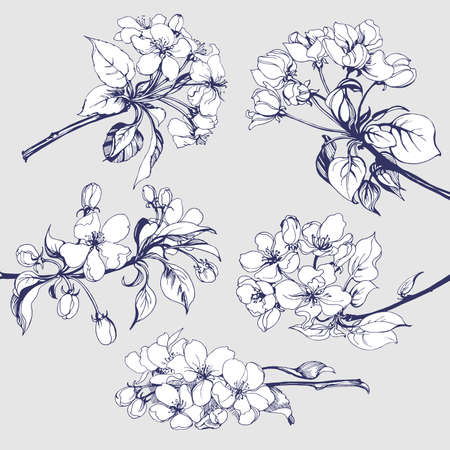 leaf line: Flower set: Sketch of blossoming Apple tree branch. element for your design. Vector illustration