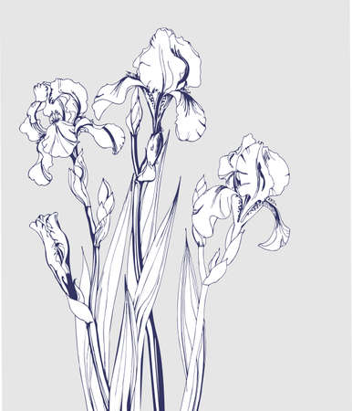 blossoming: Sketch of blossoming irises. Element for your design. Vector illustration