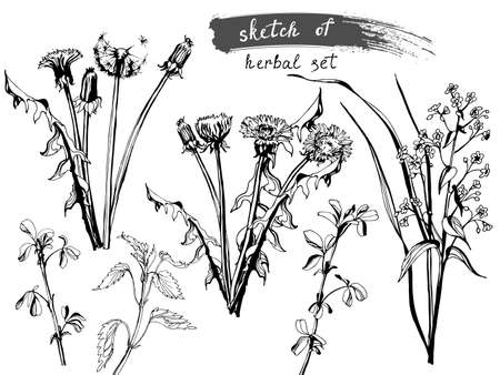 field flowers: Sketch of Wild Field Flowers and Grass. collection for designers, vector illustration Illustration