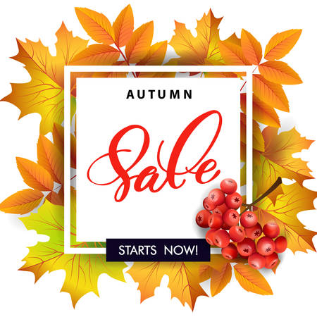 bage: Sales banner with autumn leaves and rowan berries. Template Vector.