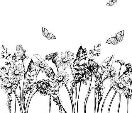batterfly: Summer background with Blooming wild flowers, daisies, cornflowers, grass, with butterflies. Template Vector. Illustration