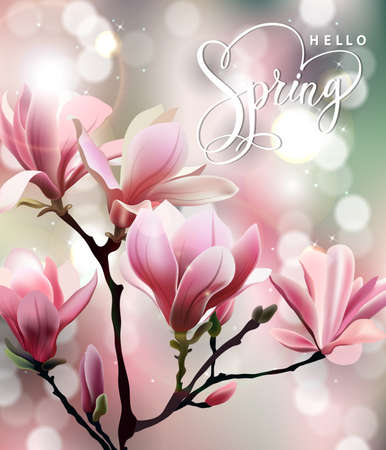 magnolia: Spring background with blossom brunch of Magnolia. Template Vector.