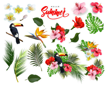 A set of   tropical flowers,  palm leaves, Toucan. Summer  background Concept with tropical flowers hibiscus.  Template Vector. Illustration