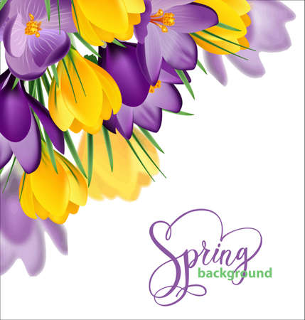 Spring background with blooming spring flowers, crocuses. Vector illustration Çizim