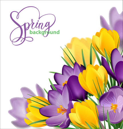 Spring background with blooming spring flowers, crocuses. Vector illustration Vectores