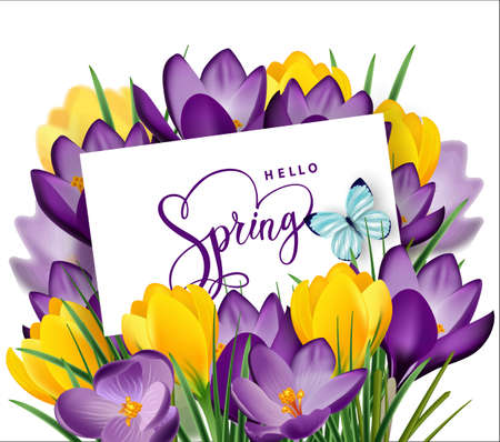 Greeting card with bouquet of spring flowers crocuses in the envelope.Vector