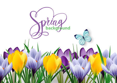 Seamless horizontal border with spring flowers crocuses and butterfly.Vector illustration