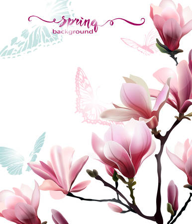 pring background with blossom brunch of Magnolia. Template Vector. Illustration