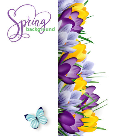 Spring background with blooming spring flowers, crocuses. Vector illustration  イラスト・ベクター素材