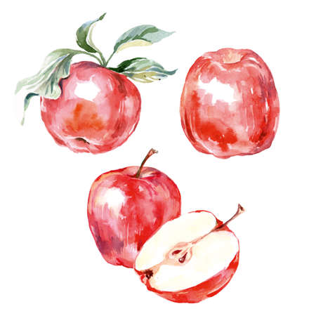 Watercolor hand drawn red apple. Isolated eco natural food fruit illustration on white background. Vector illustration