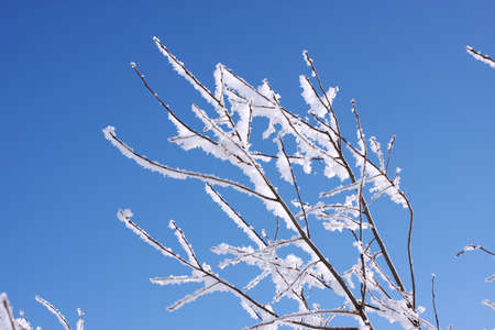 snowbound: snow-bound branches on a background blue sky