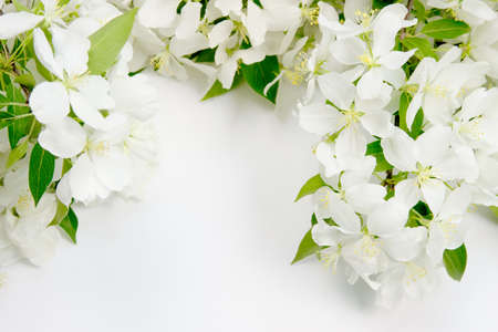 beautiful designer background with the sprigs of flowering apple-tree