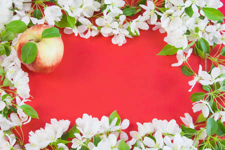 beautiful designer background with the sprigs of flowering apple-tree and red apple