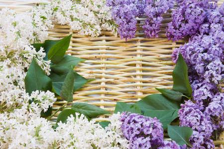 柳の小枝およびライラックの花からのデザイナーの背景 写真素材