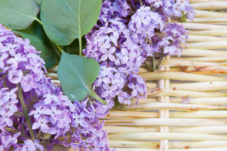 wickerwork: designer background from the twigs of willow and flowers  of lilac