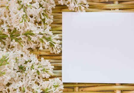 designer background from the twigs of willow and flowers  of lilac