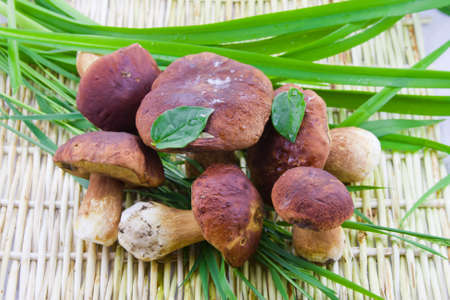 small group edible mushroom on the wattled surface with a green grass Stock Photo