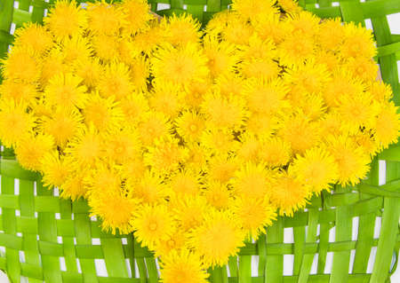 heart from brightly yellow dandelions photo