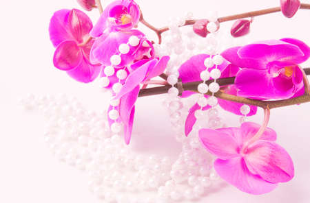 flowers of pink  orchid and beads from white pearls on a white background photo