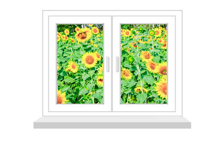 flowed: closed window with a kind on the field of sunflowers on a white background, it is isolated, raster illustration