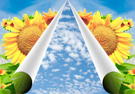recurvate pages of paper with bright sunflowers and blue sky,a beautiful background for a design photo