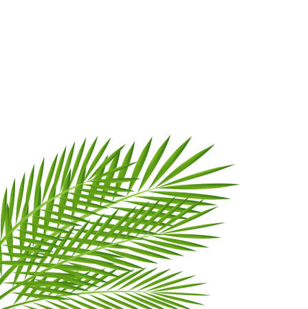 background for a design with green branches,  vector  illustration Vector