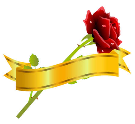 red rose and gold ribbon on a white background,vector illustration