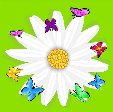background  with flowers and butterflies, vector illustration Vector