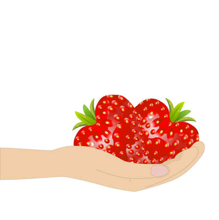 deliciously: ripe berries of strawberry in a hand on a white background Illustration