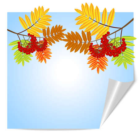 recurve: branch with autumn leaves and berries of wild ash,vector illustration
