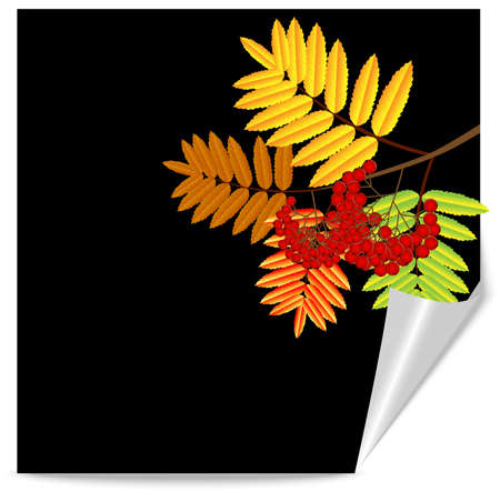 recurve: background for a design with the autumn leaves of wild ash,vector illustration
