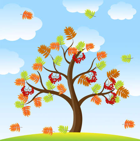 ash tree: tree with autumn leaves and berries of wild ash on a background sky,vector illustration Illustration