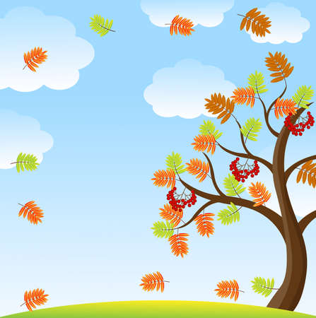 ash cloud: tree with autumn leaves and berries of wild ash on a background sky,vector illustration Illustration