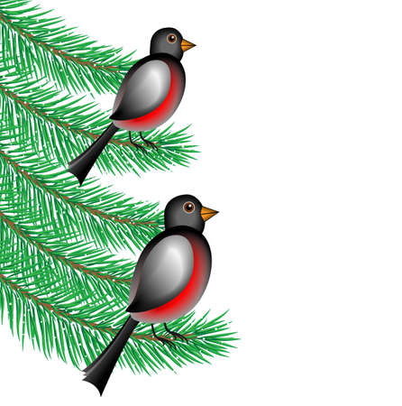bullfinchs sit on the branches of fir-tree,  vector  illustration Vector