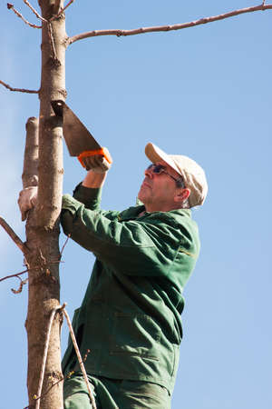 tree works: The man of average years saws trees