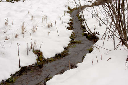 streamlet: Small streamlet in a winter wood