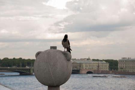 black raven: Black raven sitting on a round stone Stock Photo