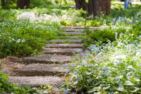 stone sunlit path in a Park overgrown with flowers and grass