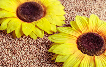 sunflower yellow flowers against spilling grains of wheat Stock Photo