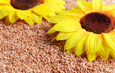 Yellow sunflowers on spilling grains of wheat. Stock Photo