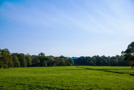 Glade in the park on a sunny day. Stockfoto