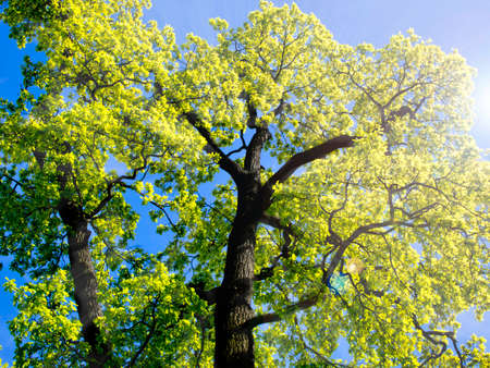 A tree with a yellow leaf against the blue sky