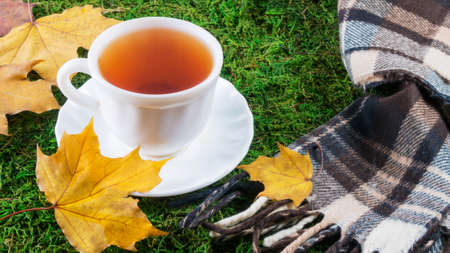 cups with tea and scarf on green grass with autumn leaves
