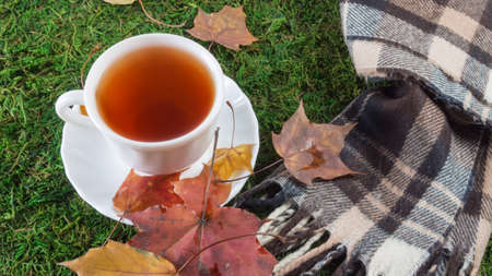 scarf, a mug of tea and fallen leaves on the green grass Stockfoto